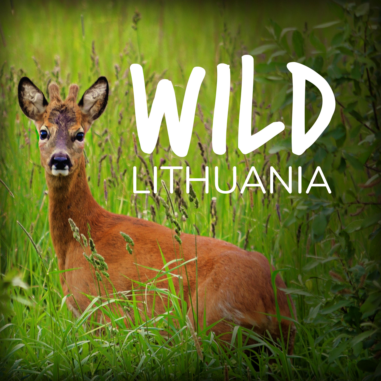 Wild Lithuania | www.junemolloy.com