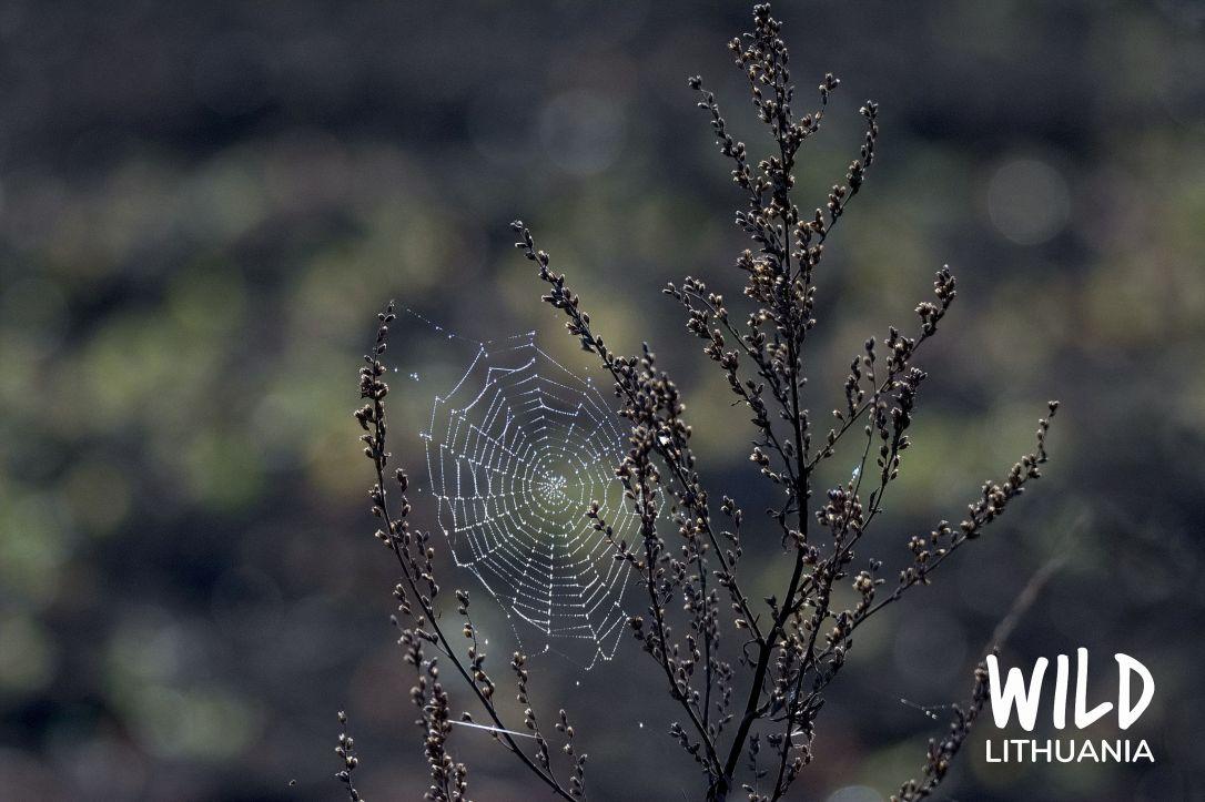 Sparkling Spider's Web | www.junemolloy.com