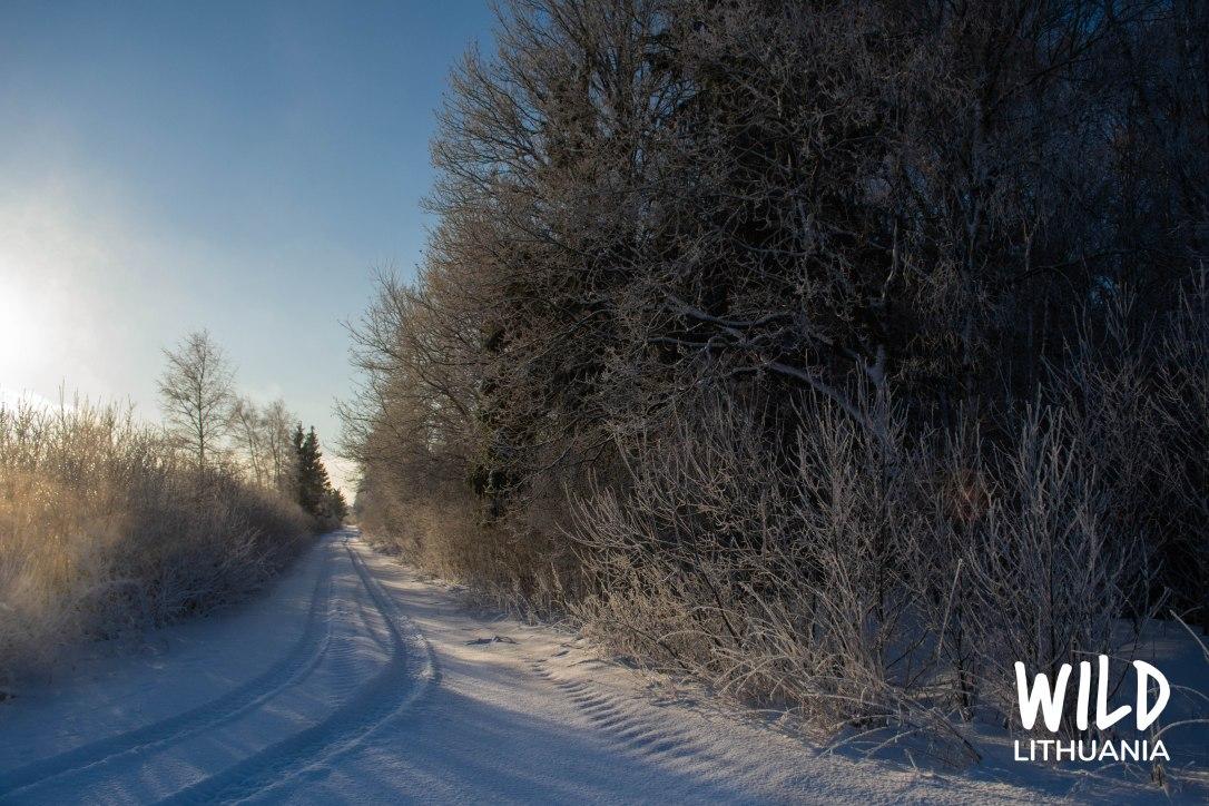 Snowy Lane, Lithuania | www.junemolloy.com