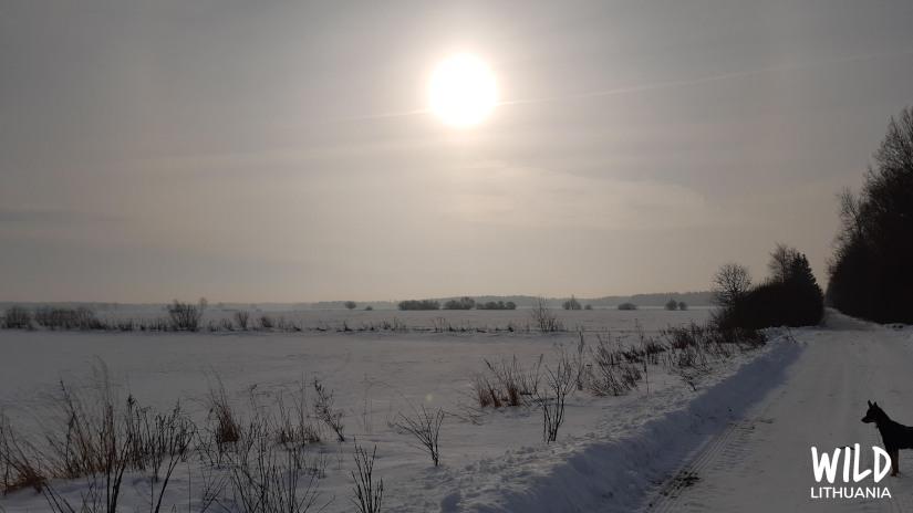 Pale Morning Sun | www.junemolloy.com