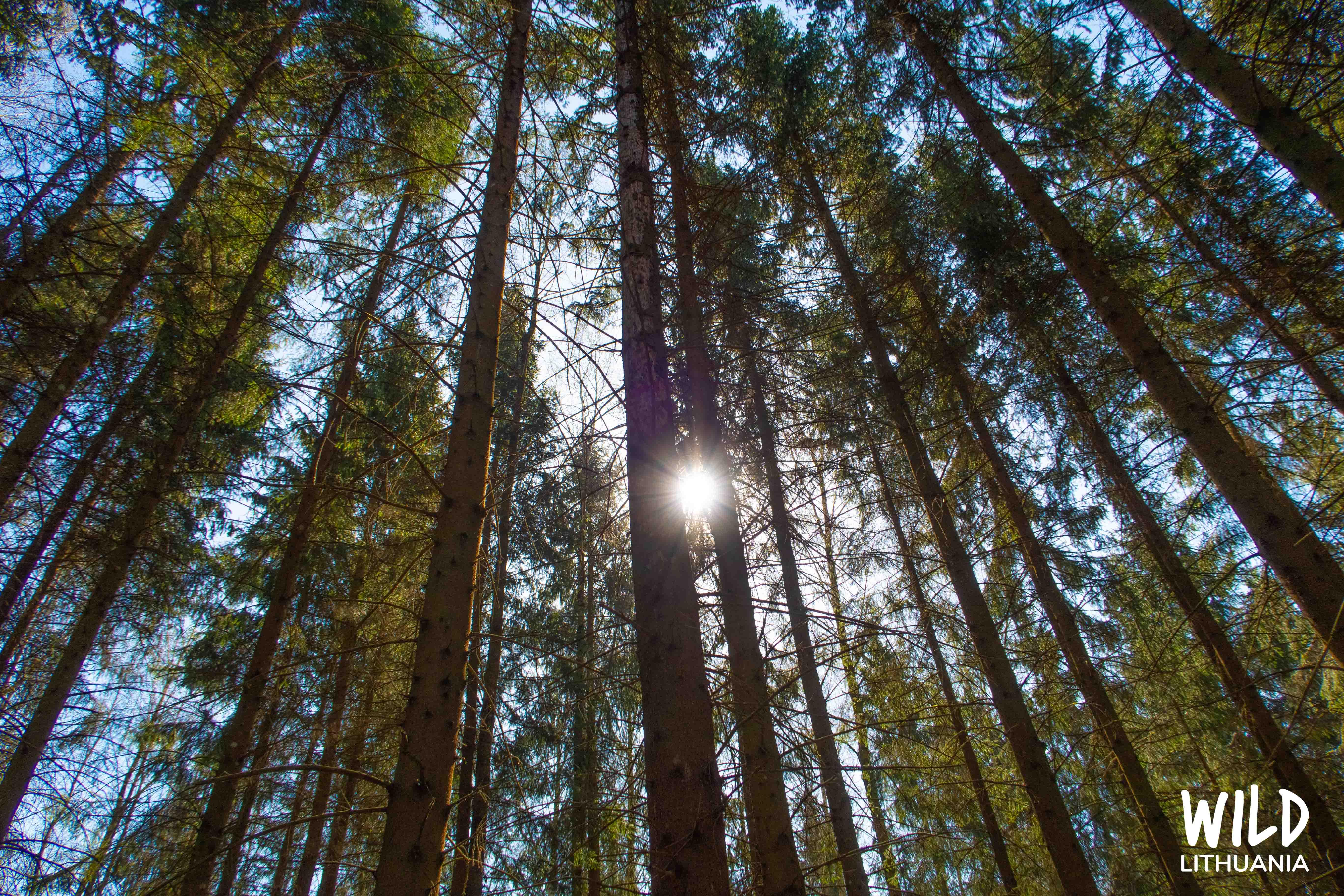 View from forest floor | www.junemolloy.com